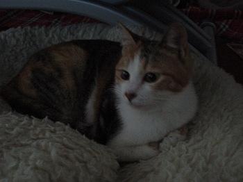 2010Apr2-Lilina1.jpg