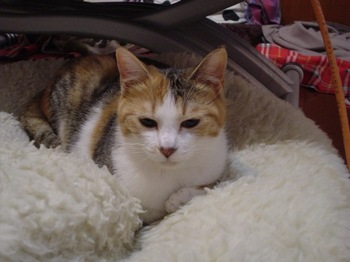2010Apr2-Lilina3.jpg