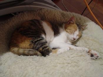 2010Apr3-Lilina1.jpg