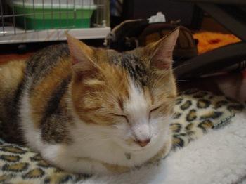 2010Apr3-Lilina7.jpg