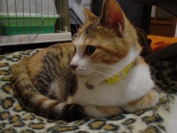 2010Apr4-Lilina1.jpg