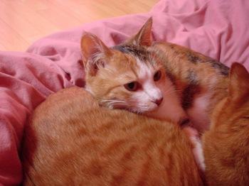 2010Apr4-Lilina&Ram2.jpg