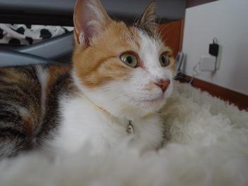 2010Apr4-Lilina4.jpg