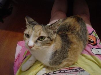 2010Aug1-Cocona6.jpg