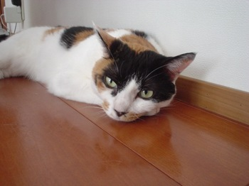 2010Aug1-Donna1.jpg
