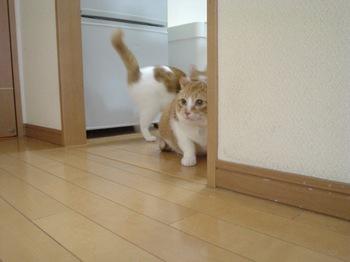 2010Feb11-Hinagiku&Char1.jpg
