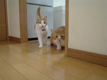 2010Feb11-Hinagiku&Char2.jpg