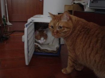 2010Feb11-Hinagiku&Ram4.jpg