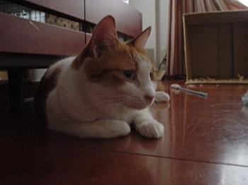 2010Feb11-Hinagiku3.jpg
