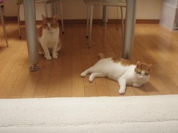 2010Feb12-Hingiku&Char1.jpg