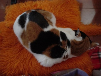 2010Feb17-Donna1.jpg