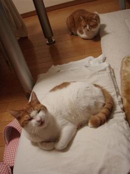 2010Feb17-Hinagiku1.jpg