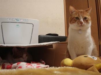 2010Feb17-Hinagiku&Char1.jpg
