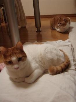 2010Feb17-Hinagiku&Char2.jpg