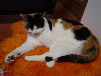 2010Feb24-Donna4.jpg