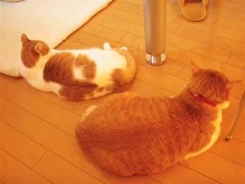 2010Feb24-Hinagiku1.jpg