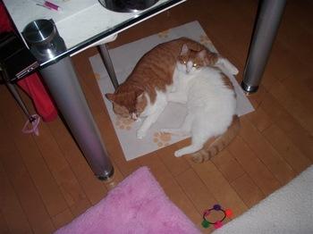 2010Feb24-Hinagiku6.jpg