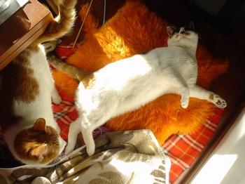 2010Feb7-Hinagiku&Donna1.jpg