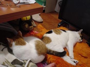 2010Feb7-Hinagiku&Donna2.jpg