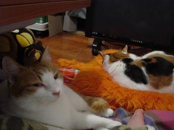 2010Feb7-Hinagiku&Donna3.jpg