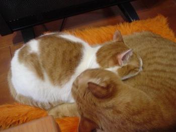 2010Feb7-Hinagiku&Ram2.jpg