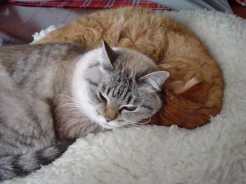 2010Jan10-Yoko&Ram3.jpg