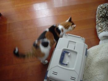 2010Jan11-Donna1.jpg
