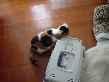 2010Jan11-Donna2.jpg