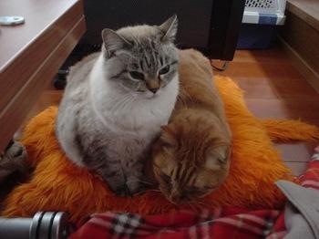 2010Jan4-Yoko&Ram2.jpg