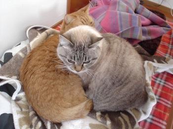 2010Jan4-Yoko&Ram3.jpg
