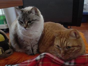 2010Jan9-Yoko&Ram1.jpg