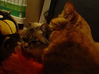 2010Jan9-Yoko&Ram3.jpg