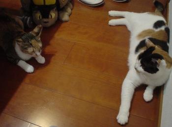 2010Jul7-Donna&Cocona1.jpg