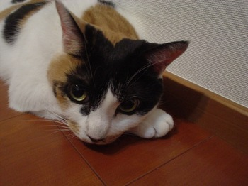 2010Jul7-Donna3.jpg