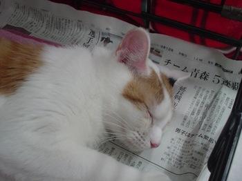 2010June27-はにぃ.jpg