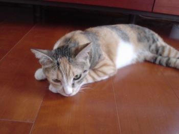 2010June28-Cocona1.jpg