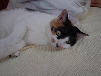 2010May22-Donna.jpg