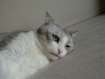 2010May22-Maruko1.jpg