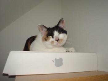2010May23-Donna3.jpg