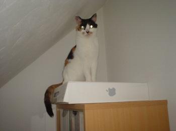 2010May25-Donna1.jpg