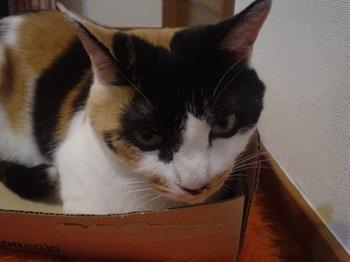 2010May25-Donna4.jpg