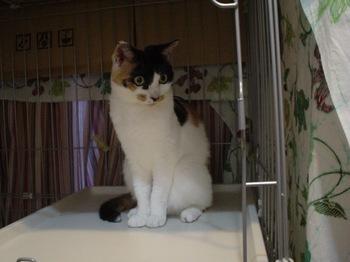2010May26-Donna2.jpg