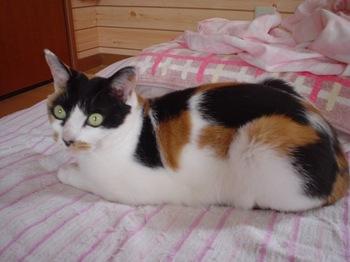 2010May26-Donna3.jpg