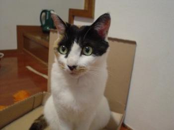 2010May26-Donna4.jpg