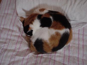 2010May29-Donna3.jpg