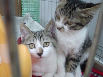 2010May30-Nisuke&Itta.jpg