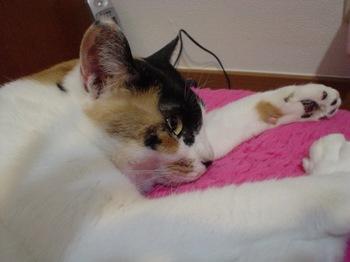 2010May31-Donna5.jpg