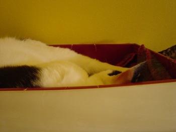 2010May9-Donna9.jpg