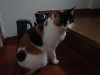 2010Oct22-Donna1.jpg