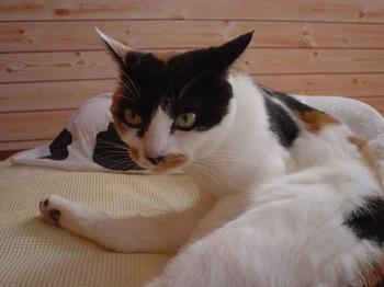 2010Oct23-Donna2.jpg